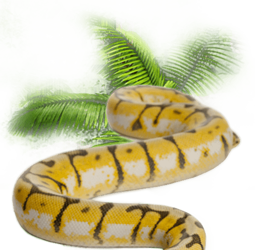 an introduction to the nature of reptiles Reptiles and amphibians - introduction, distribution, and life history   herpetofauna populations may exhibit dramatic, natural fluctuations in site  occupancy,.