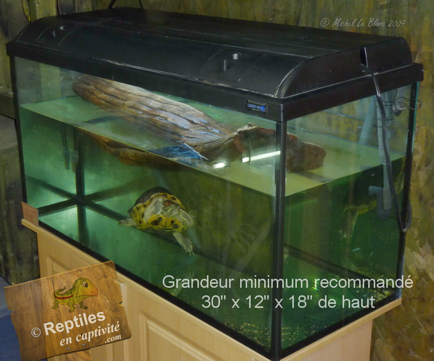 Reptiles en captivit s tortue tempes rouges - Aquarium complet pour tortue d eau ...