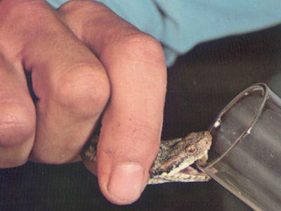 piqure d'araignée ?  Allergies et eczéma  FORUM Santé